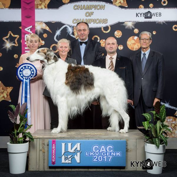 2018 sneakers cheap for discount meet Borzoi Show Results